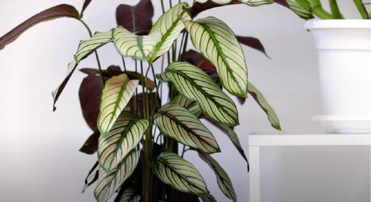Ecco la pianta da interno che assorbe l'umidità dalle ...