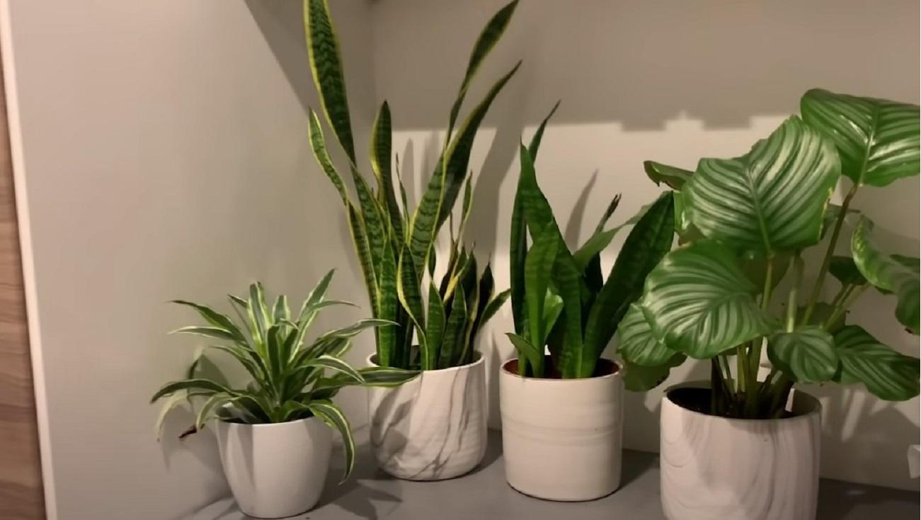 piante assorbi umidità